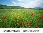 spring flowers poppy in meadow. ...   Shutterstock . vector #1050467045