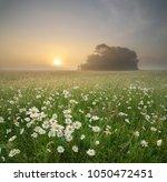 daisy meadow on foggy morning....   Shutterstock . vector #1050472451