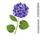 blue hydrangea flower with...   Shutterstock .eps vector #1050503834