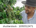 smiling man picking coffee... | Shutterstock . vector #1050512471