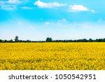 yellow flowering rape field... | Shutterstock . vector #1050542951