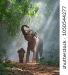 Stock photo a young elephant right next to an adult one 1050544277