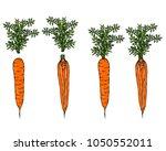 fresh orange carrots with... | Shutterstock .eps vector #1050552011