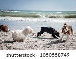 Dog Beagle Breeds Having Fun O...