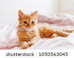 cute ginger cat lying in bed.... | Shutterstock . vector #1050563045