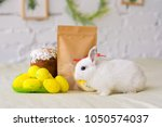 white rabbit sits on background ... | Shutterstock . vector #1050574037