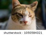 Orange and white Cat with unequal eyes gazing something. Close up on his face.