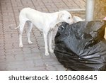 content in stray dogs and rabies   Shutterstock . vector #1050608645
