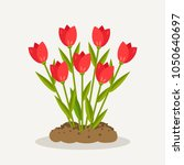 tulips  red roses  bunch of... | Shutterstock .eps vector #1050640697