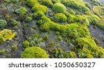 Green Moss And Algae On Slate...