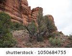 desert scene landscape agave... | Shutterstock . vector #1050684755