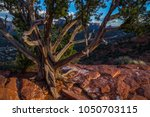 juniper tree at sunset in... | Shutterstock . vector #1050703115