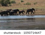 a big family of elephants in... | Shutterstock . vector #1050714647