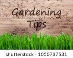 bright wooden background  gras  ... | Shutterstock . vector #1050737531