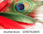 peacock feather. carnival.... | Shutterstock . vector #1050762845
