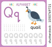 alphabet tracing worksheet for... | Shutterstock .eps vector #1050769721