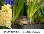 toad frog with jewel like... | Shutterstock . vector #1050780629