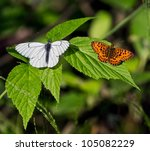 Two Of The Butterfly Leaf...