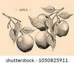 Engraving Apples With Leaves ...