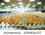 egg  layer  grading of eggs | Shutterstock . vector #1050826157
