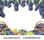 grapes on a white background | Shutterstock . vector #1050836414