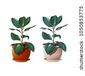 two ficus in a pot | Shutterstock .eps vector #1050853775