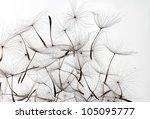 Dandelion Seeds Over White...