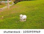 Sheep On Green Grass