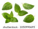 basil leaves isolated on white... | Shutterstock . vector #1050990695