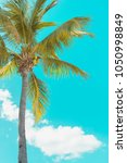 green palm tree on the bright... | Shutterstock . vector #1050998849