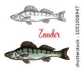 zander fish sketch icon. vector ... | Shutterstock .eps vector #1051008947