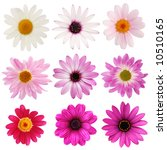 pink daisy collection | Shutterstock . vector #10510165