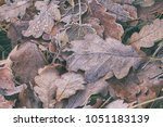 leaves in the grass in the frost | Shutterstock . vector #1051183139