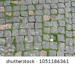 Old Square Tiles With Weeds An...