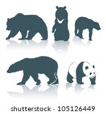 Bear Species   Vector...