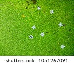 Small photo of Duckweed Swamp Surface. Natural green azolla. White flower on water fern in pool.