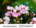 bouquet pink flowers blooming... | Shutterstock . vector #1051320437