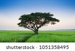 lonely green oak tree in the... | Shutterstock . vector #1051358495