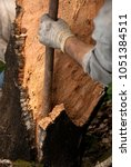 cork oak  men working in cork... | Shutterstock . vector #1051384511