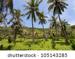 Vegetation, La Digue, Seychelles, Africa - stock photo
