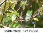 Hummingbird, Praslin, Seychelles, Africa - stock photo