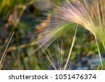 stem of a plant on a blurred... | Shutterstock . vector #1051476374