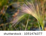 stem of a plant on a blurred... | Shutterstock . vector #1051476377