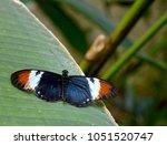 Small Postman Butterfly On Lea...