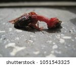 Small photo of Dead hatchling bird