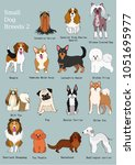 group of small dogs breeds hand ...   Shutterstock .eps vector #1051695977