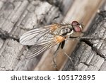 fly on wood  extreme close up... | Shutterstock . vector #105172895