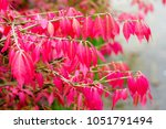 colorful background macro... | Shutterstock . vector #1051791494