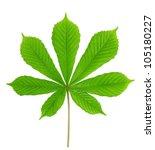 Green Leaf Chestnut Isolated O...