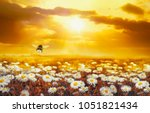 a lot of chamomile in summer... | Shutterstock . vector #1051821434